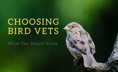 Choosing Bird Vets - What You Should Know