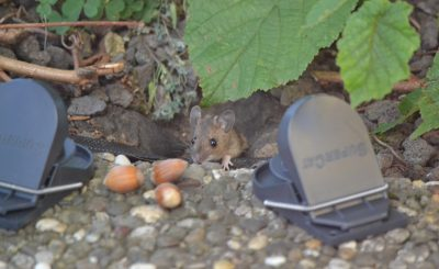 Pest Control: Do's And Don'ts For This Summer